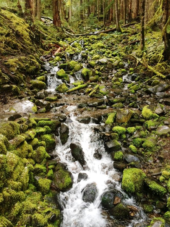 Sol Duc Falls Hike